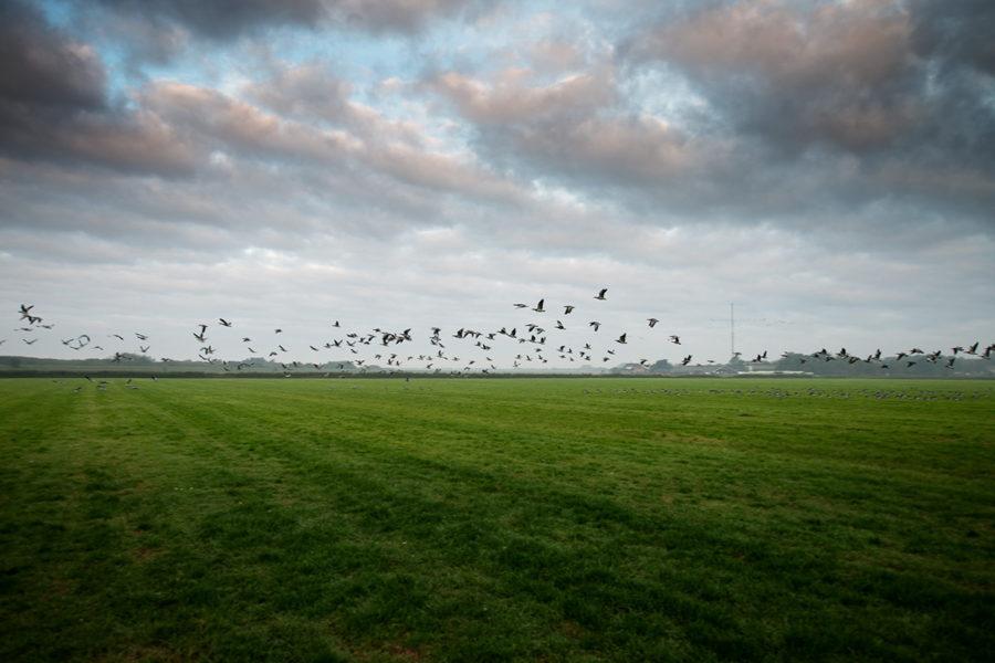 Return to Schiermonnikoog